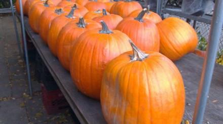 Halloween en America